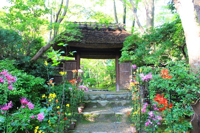 Giouji Temple_Kyoto_Spring